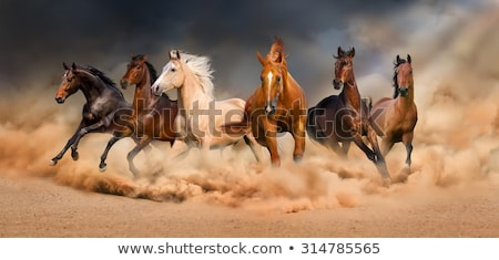 group of six horses stock photo © compuinfoto
