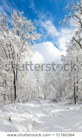 Snowbound winter earthroad Stock photo © wildman