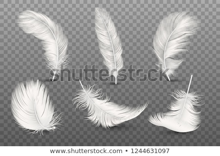 Pato branco pena ilustração fundo tropical Foto stock © colematt