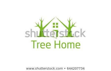 drzewo · uszkodzenie · opieki · samochodu · ciężki · deszcz - zdjęcia stock © viva