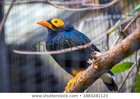парка птица красивой филиала экзотический листва Сток-фото © Juhku