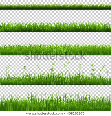 big set green grass borders transparent background stock photo © barbaliss