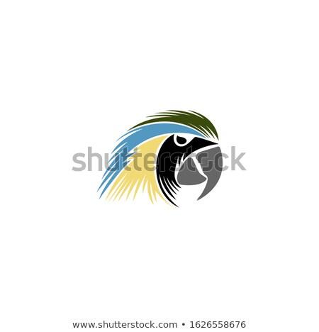amazona · papagaio · amarelo · central · américa · sol - foto stock © patrimonio
