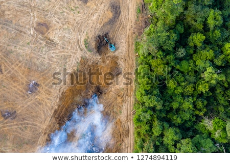 burned forest ecosystem destruction Stock photo © romvo