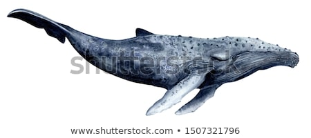 Blue whale animal cartoon on isolated background Stock photo © cienpies