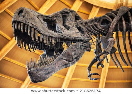 Exhibition in Natural History Museum with Skeleton Stock photo © robuart