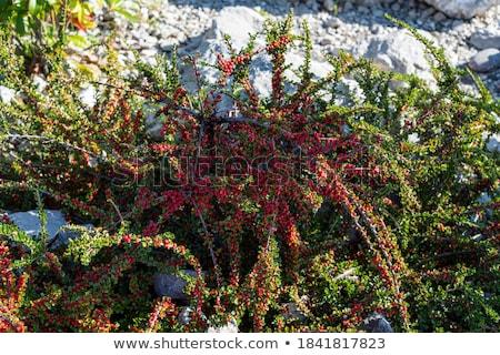 Arbusto turva primavera abstrato paisagem Foto stock © butenkow