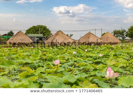 Lotus boerderij Cambodja zomer dag gebouw Stockfoto © bloodua