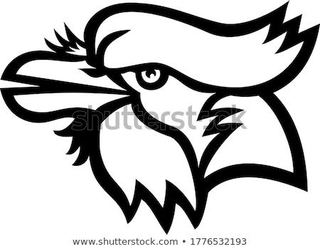 Head of Blue Jay Head Mascot Black and White Stock photo © patrimonio