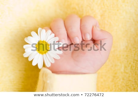 Stockfoto: Lovely Infant Hand With Little White Daisy