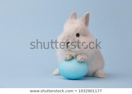 húsvét · nyulak · körvonal · aranyos · izolált · természet - stock fotó © sahua