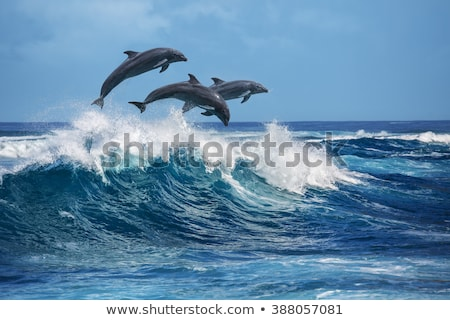 Jumping dolphins Stock photo © tilo