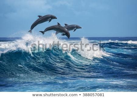 прыжки · рыбы · воды · морем · океана · весело - Сток-фото © tilo