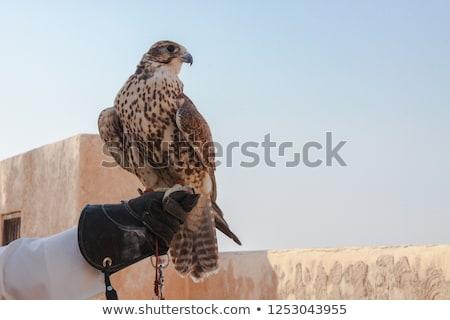 Falcon outdoor animale seduta Foto d'archivio © ivonnewierink