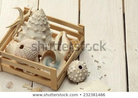 tenger · kagylók · fából · készült · doboz · fenyőfa · fa - stock fotó © calvste