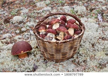 mand · champignons · vol · wild · bos - stockfoto © redpixel