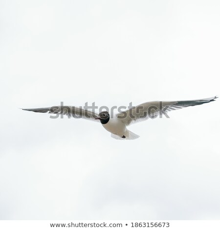 seagull spreads its wings on the beach stock photo © 3523studio