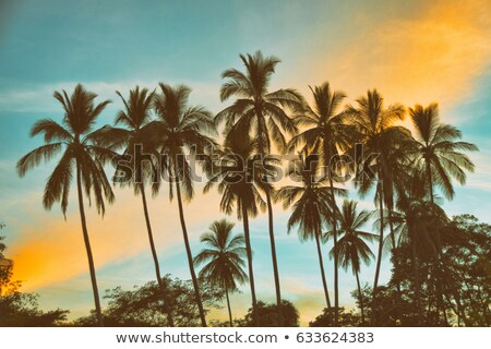 coconut palm tree silhouetted against sky and sea at sunrise stock photo © happydancing