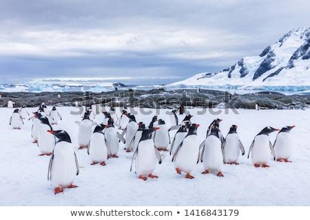 geleira · neve · belo · inverno · pesquisa · água - foto stock © procy