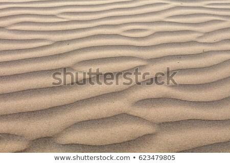 песок · пляж · фон · лет · обои · желтый - Сток-фото © toaster