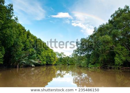 Tropical mlaştină Malaezia apă primăvară peisaj Imagine de stoc © yuliang11