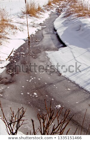 frosty snow covered grass ditch with weed Stock photo © morrbyte