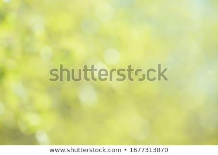 çim görüntü Stok fotoğraf © Kirschner