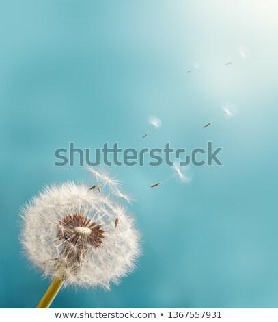 листва · абстракция · аннотация · природы · завода - Сток-фото © sirylok