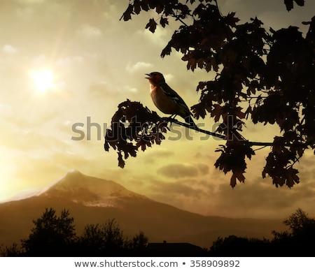 Kuşlar ağaçlar dağ gökyüzü ağaç orman Stok fotoğraf © mariephoto