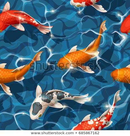 日本語 ニシキゴイ 魚 背景 白 ストックフォト © zkruger