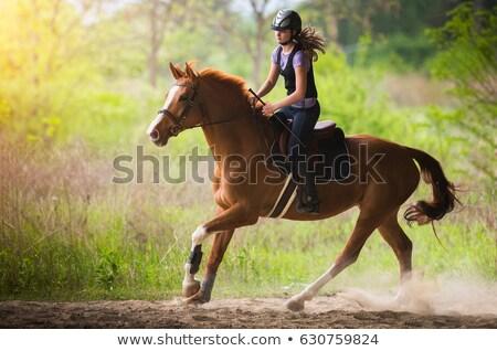 teen girl riding horse stock photo © 2tun