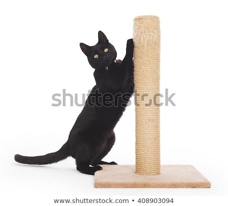 Fekete macska karcolás pólus izolált fehér macska Stock fotó © michaklootwijk