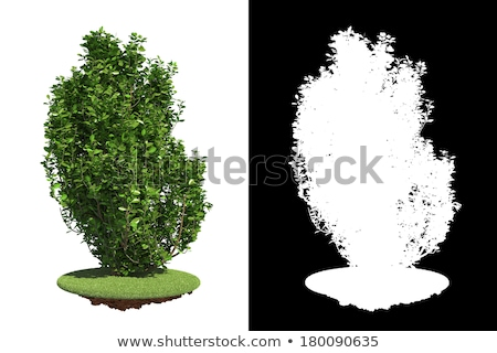 Green Shrub with Detail Raster Mask. Stock photo © tashatuvango