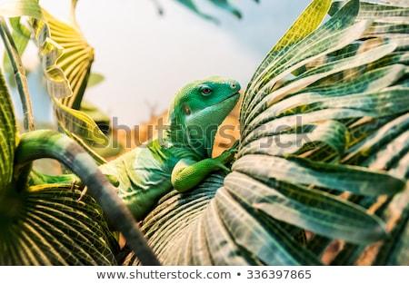 Iguana sürüngen oturma ağaç vücut yeşil Stok fotoğraf © Witthaya