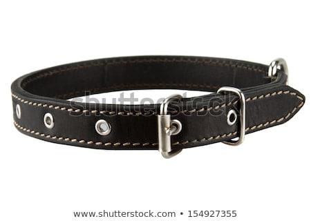 Noir cuir chien fond sécurité train Photo stock © siavramova