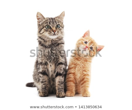 two cats stock photo © wime