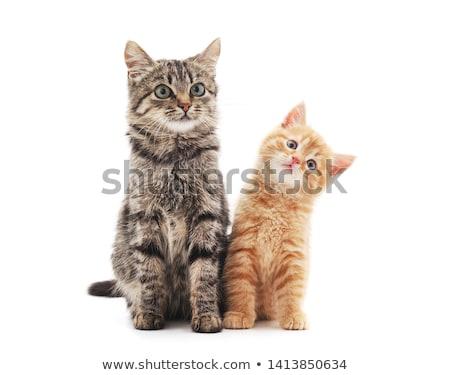 Dois gatos preto Foto stock © wime