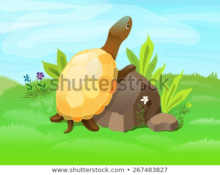 Tortue permanent pierre distance illustration Photo stock © artibelka