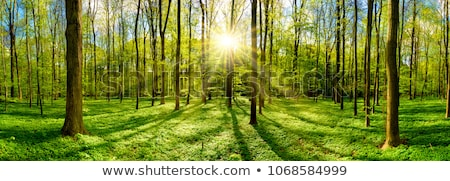 Green trees in a forest clearing Stock photo © Sportactive