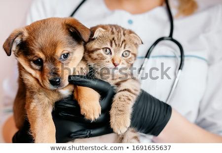 vaccinatie · jonge · vrouw · verpleegkundige · spuit · mannelijke · patiënt - stockfoto © ivonnewierink