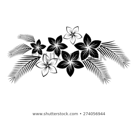 Zdjęcia stock: Asian · lilia · kwiaty · granicy · czarny · obraz