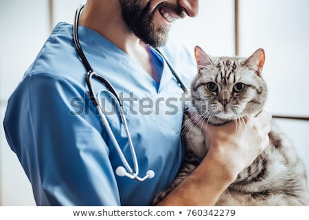 vet examining a cute grey cat stock photo © wavebreak_media