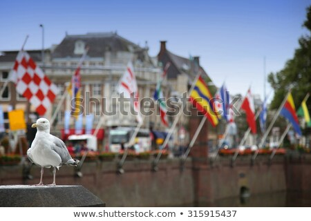 Stock photo: Seagull standing on a pillar, centre of Hague at lake Hofvijver