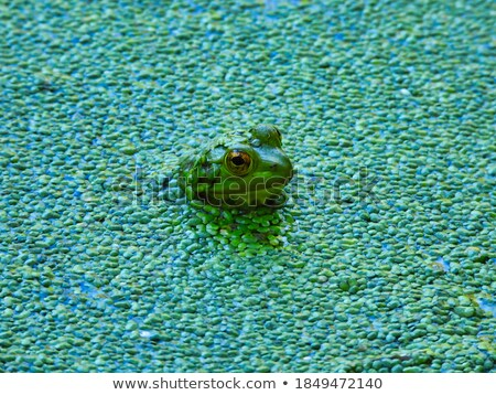 ül mocsár hát természet tavacska Stock fotó © brm1949