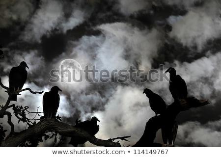 desnudo · árbol · silueta · ilustración · miedo · negro - foto stock © adrian_n