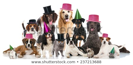 Party Pet Celebration Stock photo © Lightsource