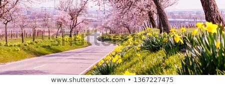 german highway scenery stock photo © prill