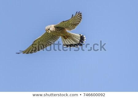 punt · zoeken · vogel · veer · dier · kijken - stockfoto © Rosemarie_Kappler