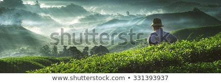 Tea plantations in Malaysia Stock photo © Vanzyst