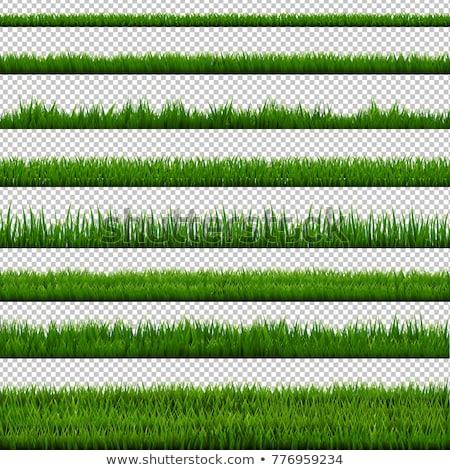 grama · verde · flores · conjunto · isolado · branco · grama - foto stock © barbaliss